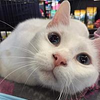Adopt A Pet :: Kisa - Columbus, OH