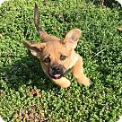 Adopt A Pet :: Patsy Cline
