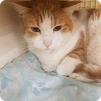 Adopt A Pet :: Rudy - Ogden, UT