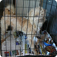 Adopt A Pet :: HARLEY - New Plymouth, ID