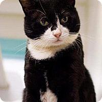 Adopt A Pet :: Tony - Cherry Hill, NJ