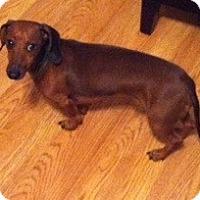 Adopt A Pet :: Oscar - Chattanooga, TN