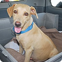 Adopt A Pet :: Fawn - Minneola, FL