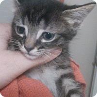 Adopt A Pet :: Brewster - Lawrenceville, GA