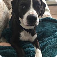 Adopt A Pet :: Franklin - Foster, RI