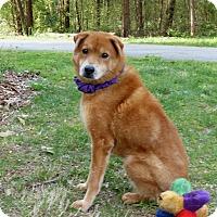Adopt A Pet :: Eden - Mocksville, NC