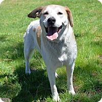 Labrador Retriever Mix Dog for adoption in Mountain Center, California - Ginger