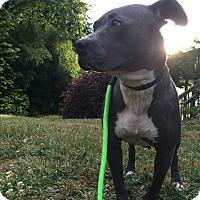 Adopt A Pet :: Winter - Tumwater, WA