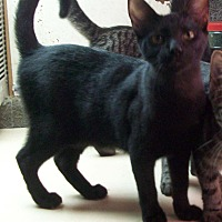 Adopt A Pet :: CLARK - Morriston, FL