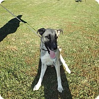 Adopt A Pet :: Rango - Quincy, IN