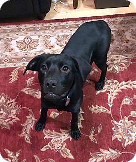 Labrador Retriever Mix Dog for adoption in Marietta, Georgia - Delilah
