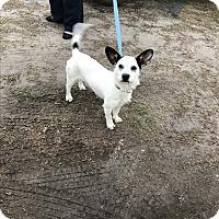 Adopt A Pet :: Duke - Glen St Mary, FL