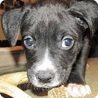 Adopt A Pet :: Ferdinand - Akron, OH