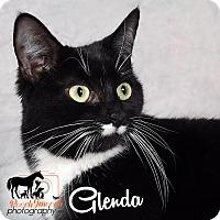 Adopt A Pet :: Glenda - Broadway, NJ