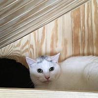 Adopt A Pet :: Athena - Blaine, MN