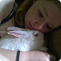 Adopt A Pet :: Banira - Seattle c/o Kingston 98346/ Washington State, WA