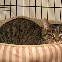 Adopt A Pet :: Amber Marie - Milford, MA
