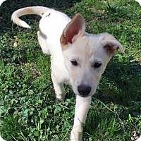 Adopt A Pet :: Cher - Marlton, NJ