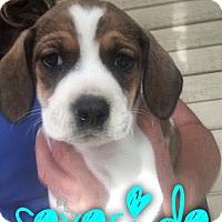 Adopt A Pet :: Severide - Garden City, MI