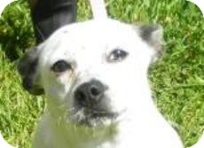 Terrier (Unknown Type, Small)/Jack Russell Terrier Mix Dog for adoption in Lincolnton, North Carolina - Rosie