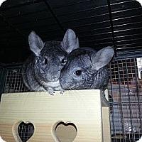 Adopt A Pet :: Zelda & Tetra - Jacksonville, FL
