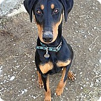 Adopt A Pet :: Ziva--adopted!! - New Richmond, OH