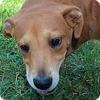 Adopt A Pet :: Janet--Reduced fee $300 - Foster, RI