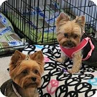 Adopt A Pet :: Lola and Penny - Hardy, VA
