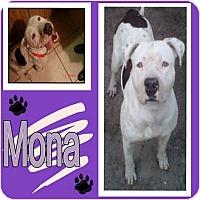 Adopt A Pet :: MONA - Hollywood, FL