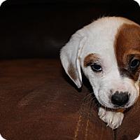 Adopt A Pet :: So - Westminster, CO