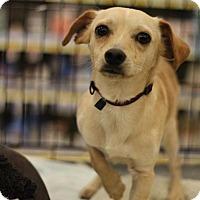 Adopt A Pet :: Chando - Sacramento, CA