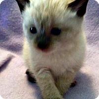 Adopt A Pet :: Lafayette - Jefferson, NC