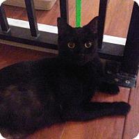 Adopt A Pet :: caleb - Hollywood, FL