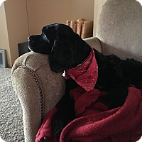 Adopt A Pet :: Henry 6yr Adopted - Mentor, OH
