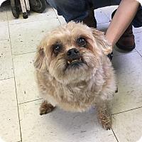 Adopt A Pet :: Sadie - Visalia, CA