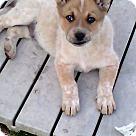 Adopt A Pet :: Garth (has been adopted)