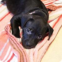 Adopt A Pet :: Barbie - Grand Rapids, MI