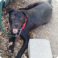 Adopt A Pet :: Ripley - Wallis, TX