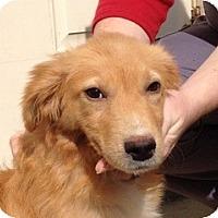 Adopt A Pet :: Nessa - New Canaan, CT