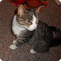 Adopt A Pet :: Thelma - New Egypt, NJ