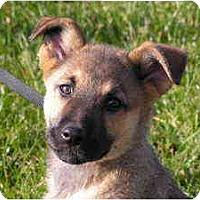 Adopt A Pet :: Sugar - Rigaud, QC