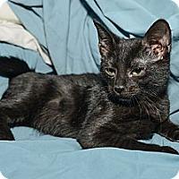 Adopt A Pet :: Carlos - New York, NY