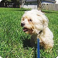 Adopt A Pet :: Bentley - Jacksonville, FL