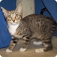 Adopt A Pet :: K-Gail5-Mikail - Colorado Springs, CO