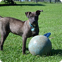 Adopt A Pet :: Charlie - Homewood, AL