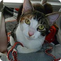 Adopt A Pet :: Holly - Hamburg, NY