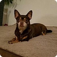 Adopt A Pet :: Bell - Gainesville, FL