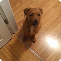Adopt A Pet :: Dusk - Pitt Meadows, BC