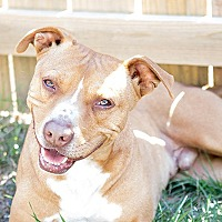 Adopt A Pet :: Lucky Peanut - Durham, NC