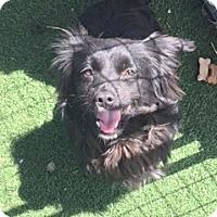 Adopt A Pet :: DAVID - San Pablo, CA